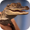Reptiles are Cool! -- Animal Assembly Show