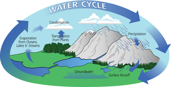 Here's a nice Water cycle diagram!  Thank you, NASA!